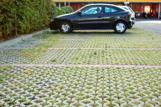We have permeable pavers in the driveway and love them! Great for saving our live oak.