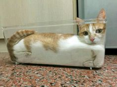 Cat in glass container!  So Funny!!