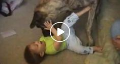 Quem é Que Precisa De Brinquedos Quando Se Tem Um Cão?!