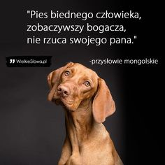 Animals, Planer, Dog, Magick, Diy Dog, Animales, Animaux, Dogs, Animal Memes
