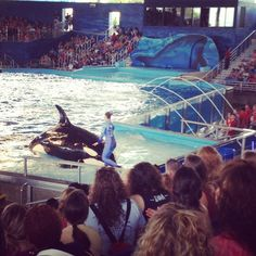 Tips for Sea World San Antonio with kids (and without).