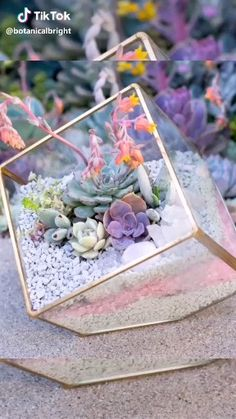 DIY Succulent Arrangements How to DIY succulents beautiful? Get rare succulents online. Over 500 + exotic rare succulents for sale. Use Discount code: We bring joy to your home gardening experience! Terrariums Diy, Terrarium Centerpiece, Mini Terrarium, How To Make Terrariums, Terrarium Plants, Succulent Terrarium Diy, Glass Terrarium Ideas, Terrarium Table, Terrarium Wedding