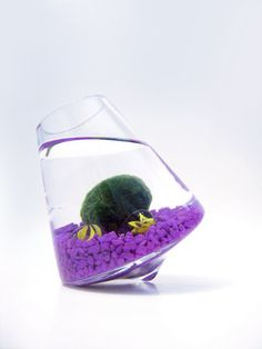 Marimo in the Purple Rocking Playground