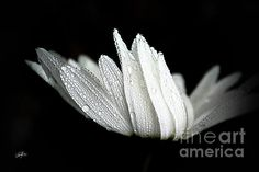 Joy Comes in the Morning by Pacific Northwest Photographer Cheryl Rose, FAA
