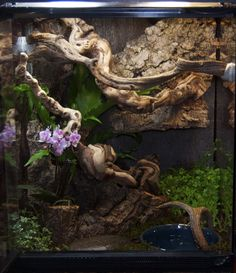 Zoo Med Terrarium designed as a Carpet python habitat. DIY this terrarium with Mopani Wood, Sand blasted Grapevine, Cork Flats, and live plants of your choosing. Reptile Habitat, Reptile Room, Reptile Cage, Geckos, Hermit Crab Tank, Hermit Crabs, Snake Enclosure, Chameleon Enclosure, Snake Terrarium