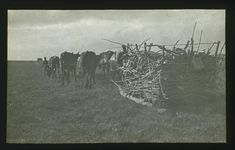 Oxen drawing sledge with firewood across veld. - Atom site for DRISA Access Point Name, Script S, Latitude Longitude, Firewood, History, Drawings, Painting, Animals, Art