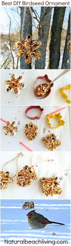 How to Make The Best Birdseed Ornaments, Homemade Birdseed treats make the perfect family activity, DIY Bird feeders are a great craft for kids // bird // seed // ornaments // kids // diy // outdoor // nature // holidays // Christmas // winter // Nature Crafts, Fall Crafts, Diy And Crafts, Crafts For Kids, Kids Diy, Beach Crafts, Upcycled Crafts, Creative Crafts, Decor Crafts