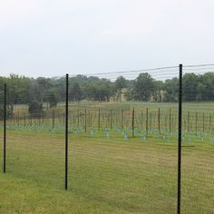 6' X 100' Standard Perimeter Deer Fence by DeerBusters. $125.95. Easy To Install. Protects Your Garden From Deer. Virtually Invisible. Lasts 15 Years. 600 lbs/sq. ft. Breaking Strength. Standard Deer Fencing is the perfect solution to deer damage in your backyard garden. Designed with the homeowner in mind, this deer fencing is easy to intall and maintain. The black grid construction of the deer fence allows it to become virtually invisible when installed, blending into tre...