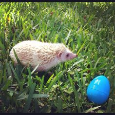 Happy Easter from Oliver the Hedehog!