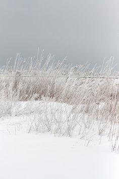 kiele.of.the.sea: March 2011