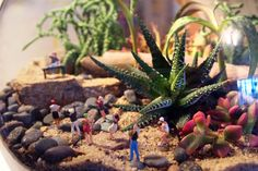 Beach party! (in a terrarium of course)