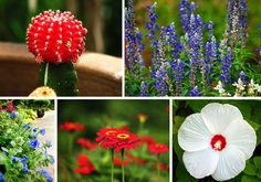 See what's in bloom July 4 at the Dallas Arboretum, Dallas Arboretum, Garden, Flowers, Dallas