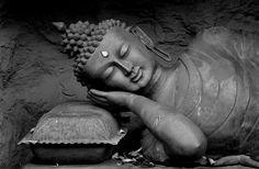 285 / Mit Buddha meditieren -   Botanika im Rhododendronpark - Vom Himalaya führt der Weg hinab ins Tal. Hier beginnt die Expedition durch Yunnan, Burma und Neuguinea. Original-Exponate wie Kultpfähle asiatischer Ur-Völker, Gebetsmühlen, ein chinesischer Teepavillon sowie die größte Buddha-Statue außerhalb Asiens begleiten Sie auf Ihrer Reise durch eine neue, fremdartige Welt, in der es eine Menge  zu entdecken gibt.