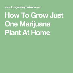 How To Grow Just One Marijuana Plant At Home More