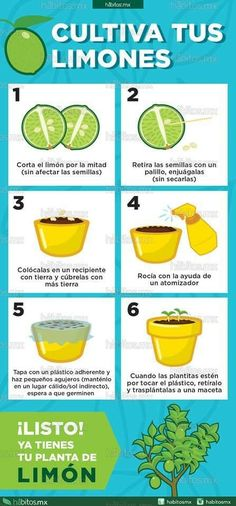 Houseplants That Filter the Air We Breathe Hbitos Health Coaching Cultiva Tus Limones Eco Garden, Edible Garden, Garden Plants, House Plants, Water Garden, Green Life, Growing Plants, Garden Projects, Agriculture