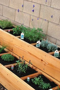 Man, I would love to have something like this in my garden!  Separate sections for each kind of herb.