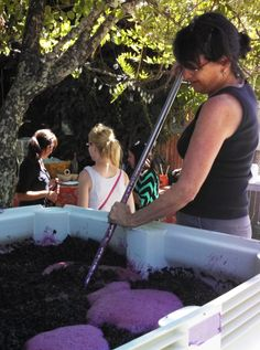"Winemaker and Tres Sabores Winery owner, Julie Johnson, punches down the skin and grape ""cap"" in a fermenting bin of syrah as bubbling CO2 escapes. #napaharvest #harvest2012 #napavalley"