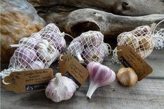 A LIMITED mixed pack of very special garlic.  250gm of Oak Hot Smoked Garlic, 250gm of Champion Dunganski and 500gm Simple Jack 40 Garlic.    The smoked garlic has been smoked with chip from the beautiful 150 year old English Oak that is an icon on my farm.  Hot smoked to prevent any shooting, but keeping the raw like texture of the garlic that will allow you to use it like normal fresh garlic in your cooking.  Just adds the amazing depth of smokey flavour to any dish.  Simple Jack 40 is…