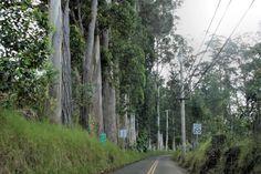 Olinda Road, Maui