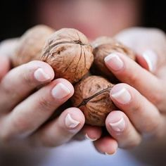 Learn more about the high yields and superior flavor of our Carpathian English Walnut Trees! Health Benefits Of Walnuts, University Of California Davis, English Walnut, Sensitive Plant, The Husk, Patio Plants, Edible Plants, Foliage Plants, Stuffed Shells