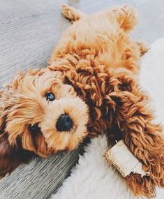 pet dogs breeds,dogs training obedience,dogs ideas for the home Super Cute Puppies, Baby Animals Super Cute, Cute Baby Dogs, Cute Little Puppies, Cute Dogs And Puppies, Cute Little Animals, Cute Funny Animals, Doggies, Tiny Puppies