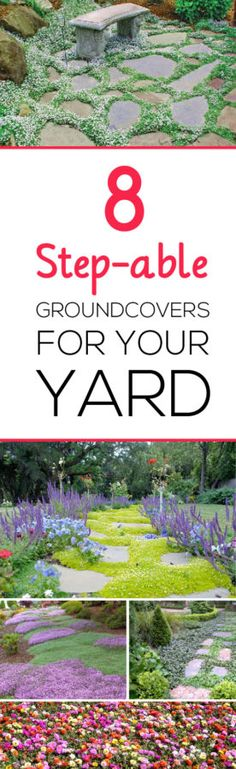 Let me do all the research for you- learn about 8 beautiful step-able groundcovers for your yard!