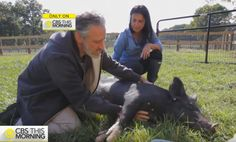 He made people laugh and now he rescues abused factory farm animals #PplIRespect #JonStewart  http://althealthworks.com/9305/life-is-good-for-jon-stewart-who-now-runs-an-award-winning-animal-sanctuary-with-his-wife/