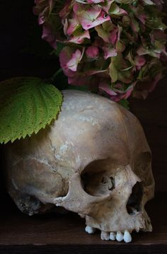 Skull Photography by Weidwan - Obsessed With Skulls