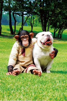Pan-Kun & his buddy, James. Monkey and Bulldog