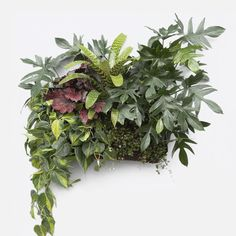 Superbalist Planters - Wall Planter