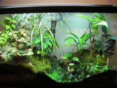 biome fish tank The Paludarium Half Aquarium Half Land frog terrarium aquarium terrarium Gecko Terrarium, Aquarium Terrarium, Aquarium Setup, Glass Aquarium, Planted Aquarium, Aquarium Stand, Reptile Terrarium, Green Tree Frog, Green Trees