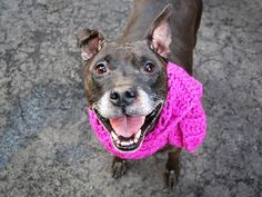 ★❥★ SAFE 3/25/15  by Amsterdog Animal Rescue ★❥★ SUPER URGENT 3/16/15 Manhattan Center   DIAMOND - A1030429  FEMALE, BLACK, AM PIT BULL TER / LABRADOR RETR, 11 yrs OWNER SUR - EVALUATE, NO HOLD Reason OWN EVICT  Intake condition EXAM REQ Intake Date 03/15/2015 https://www.facebook.com/photo.php?fbid=979003285445884
