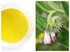 ALIFIE anti-inflamatoare pentru DURERI musculare și ARTICULARE – rețetă de casă Therapy, Plant