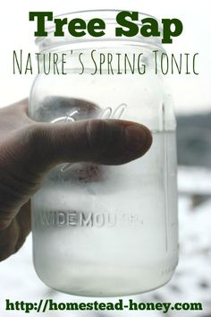 Full of minerals, tree sap is a delicious and refreshing spring tonic beverage. | Homestead Honey