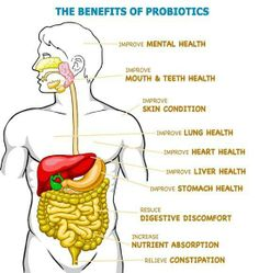 """Benefits of probiotics by High Country Kombucha on FB-  Kombucha tea or real yogurt that has """"Live Cultures"""" (and No, Yoplait is NOT real yogurt folks, in fact, Yoplait does your body more harm than good)"""