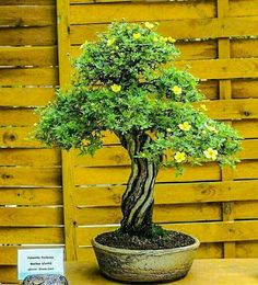 Bonsai Bonsai Garden, Bonsai Art, Bonsai Styles, Tiny World, Terrariums, Flowers, Plants, Trees, Gardens