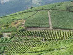 Vineyard, Outdoor, Maria Theresa, Outdoors, Vine Yard, Vineyard Vines, Outdoor Games, The Great Outdoors
