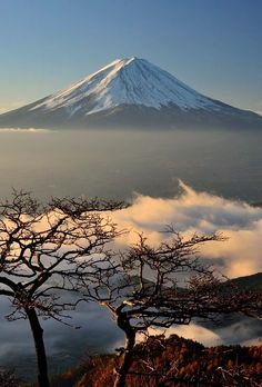 I saw the Fuji floating in the sea of ​​clouds shining in the morning sun from the mountain pass. There were the tree of stunning like a bonsai. Fuji and the tree had been a stunning scenery to match well with the sea of ​​clouds. All Nature, Amazing Nature, Monte Fuji Japon, Places Around The World, Around The Worlds, Beautiful World, Beautiful Places, Japon Tokyo, Mont Fuji