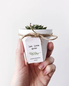 How to pick meaningful and cheap wedding favors---White Painted Terra Cotta Pot Succulent Wedding Favours, Baby Shower Favours, Mini Succulent Favours, Modern Wedding, Rustic Wedding Wedding Favors And Gifts, Succulent Wedding Favors, Rustic Wedding Favors, Bridal Shower Rustic, Wedding Ideas, Wedding Decorations, House Decorations, Wedding Planning, Diy Wedding Souvenirs