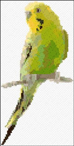 Green parakeet free download