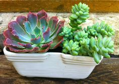 USA pottery succulents