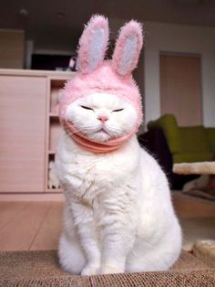 """trophywreck: """" boredpanda: """" This 17-Year-Old Cat Is The Laziest Internet Star In Japan """" @strawberrymilk95 """""""