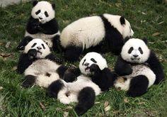 Relaxando em grupo.