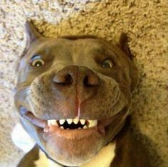 38 Funny Dogs and Puppies Pictures