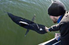 'Silent Nemo' – the underwater tuna fish spy drone