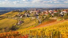 Food & Wine: An Ode to Red Wines from Italy's Alto Piemonte