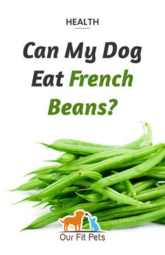 Can my dog eat French beans? Yes! In fact, dogs eating a low-fat diet will benefit and enjoy green beans. The beans are filling and are an excellent source of nutrition for dogs. French green beans also make a healthy snack for any dog. Fresh green beans are best for your pup, so avoid giving him canned green beans (too much salt included).