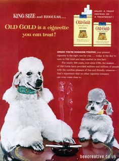 Old Gold Cigarette Poodle Advert.......these must be the same dogs who play poker.
