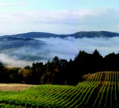 Oregon Wine Country is beautiful.