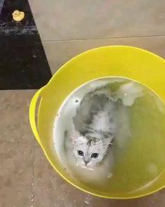 Funny Cute Cats, Cute Baby Cats, Cute Cat Gif, Cute Cats And Kittens, Cute Little Animals, Cute Funny Animals, Kittens Cutest, Funny Dogs, Cute Cat Video